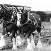 Page link: Ploughing Match