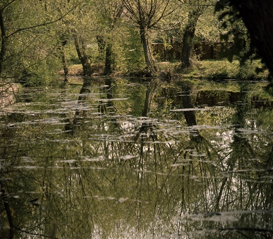 Photo:Rayleigh Castle Moat reflections
